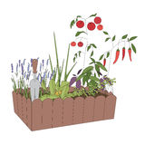 Container with growing vegetables and tools Royalty Free Stock Photo