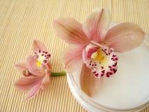 Container kosmetische bevochtigende room met roze orchideeën Royalty-vrije Stock Fotografie