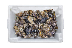 Container met oestershells Royalty-vrije Stock Afbeeldingen