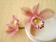 Container Of Cosmetic Moisturizing Cream With Pink Orchids Royalty Free Stock Photography