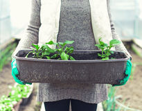 Container with seedlings. Stock Images