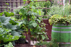 High garden beds. Vegetable high garden beds can be produced from different materials, or use various wooden containers to suitably protected with natural colors Stock Image