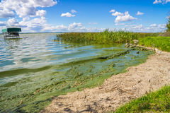 Contaminação das algas azul esverdeado Fotografia de Stock Royalty Free