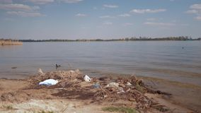Contaminación ambiental en naturaleza, basura plástica en el río sucio y nadadas salvajes del pájaro en agua almacen de metraje de vídeo