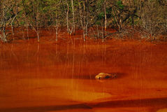 Contaminación de agua Foto de archivo