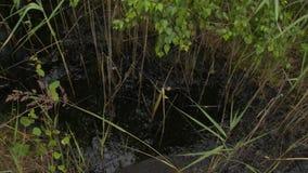 Contaminación de agua tóxica del aceite Agua del pantano cubierta con el material negro almacen de video
