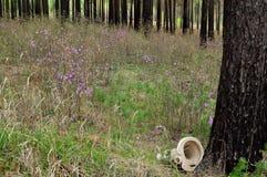 Contaminación de bosques con basura del hogar Fotografía de archivo libre de regalías