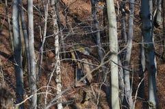 Contaminación de hoy de la cultura humana de la naturaleza y del bosque imagenes de archivo
