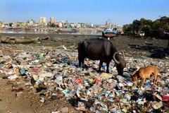 Contaminación de la playa del mar de Bombay Fotos de archivo libres de regalías