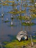 Contaminación de las aguas residuales Imagen de archivo