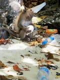 Contaminación 2/2 del globo de la tenencia del mono imagen de archivo