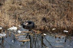 Contaminación del medio ambiente. Imagen de archivo libre de regalías
