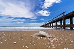Contaminación en la playa Fotos de archivo libres de regalías