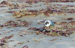 Contaminación en la playa, caja plástica desechada en la playa Imagen de archivo