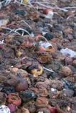 Contaminación orgánica Imagen de archivo libre de regalías