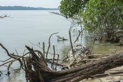 Contaminación plástica cogida en árboles muertos imagen de archivo