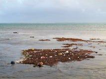Contaminación y basura que flotan a lo largo de la orilla imagen de archivo libre de regalías