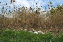 Contaminaci?n ambiental Basura en naturaleza Botellas y bolsos pl?sticos del celof?n en el r?o imagen de archivo