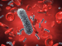 Contaminated blood. Bacteria and red blood cells , contaminated blood stock photo
