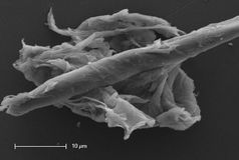 Contamination de culture cellulaire Photographie stock