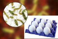 Contamination of eggs with Salmonella bacteria, medical concept for transmission of salmonellosis. 3D illustration stock photography