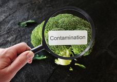 Detecting food contamination. Contamination label on broccoli, being examined by a person with magnifying glass Stock Images