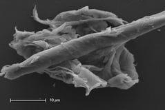 Contaminazione della coltura cellulare Fotografia Stock