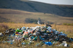 Contaminazione della natura Immagini Stock Libere da Diritti