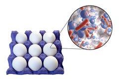 Contaminazione delle uova con i batteri, concetto medico per la trasmissione delle infezioni dell'alimento attraverso le uova Fotografia Stock Libera da Diritti