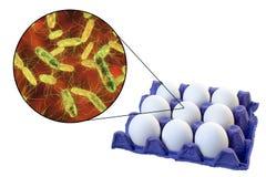 Contaminazione delle uova con i batteri della salmonella, concetto medico per la trasmissione di salmonellosi Fotografia Stock Libera da Diritti
