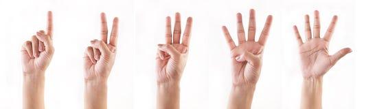 Contando as mãos (1, 2, 3, 4, 5) fotos de stock