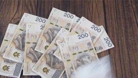 Contando o dinheiro Zloty polonês de PLN video estoque