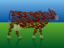 Contant geldkoe Rich Green Pasture Stock Afbeelding