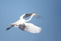 Contar con el Egret Foto de archivo libre de regalías