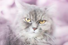 Contato de olhos do gato imagem de stock