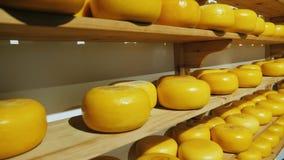 Contatore con i cerchi del formaggio dell'azienda agricola Parecchi scaffali con formaggio olandese archivi video