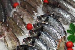 Contatore del mercato dei frutti di mare Fotografia Stock Libera da Diritti