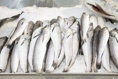 Contatore del pesce fresco Fotografia Stock