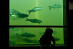 Contatore di color salmone Fotografia Stock