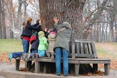 contatto aincient della gente della quercia Fotografia Stock