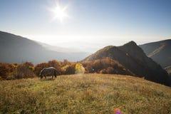 Conte d'automne avec le lever de soleil et les chevaux de montagne Photo stock