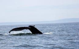 Conte de baleine de bosse dans le San Juan Islands Photo stock