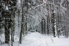 Conte de fées blanc - hiver Forest Landscape et neige - 5 photos stock