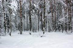 Conte de fées blanc - hiver Forest Landscape et neige - 6 photo libre de droits