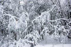 Conte de fées blanc - hiver Forest Landscape et neige - 7 image libre de droits