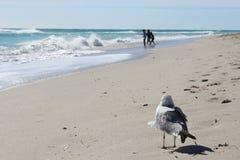 Contemplando a gaivota Imagens de Stock