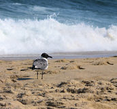 Contemplation. A seagull rests on a peaceful shore Royalty Free Stock Photos