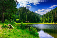 The contemplation of the beautiful scenery. Stump and bush on the bank of a lake in a mountainous coniferous forest Stock Photos