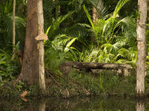 Contemplation seat on lilypond with ferns and Paperbark trees, Sunshine Coast, Queensland, Australia. Royalty Free Stock Photo