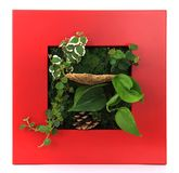 Contemporary wall planter Stock Photography
